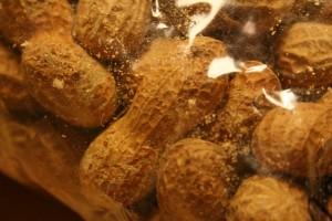 Mehlmotten vorhanden sein richtig erkennen und berwerten