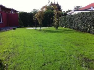 Rasen ohne Unkraut