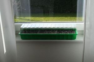 jetzt im m rz eigene tomatenpflanzen s en und aufziehen. Black Bedroom Furniture Sets. Home Design Ideas